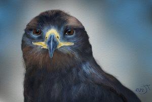 Name:  Revised eagle.jpg Views: 31 Size:  9.3 KB