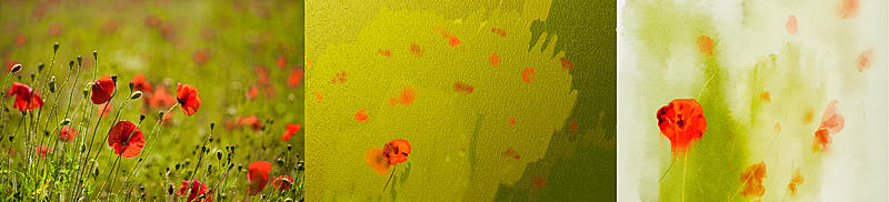 Click image for larger version.  Name:poppies.jpg Views:28 Size:187.2 KB ID:98902