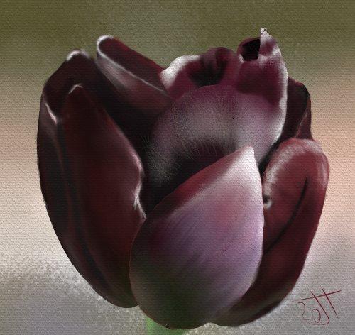Name:  Tulip.jpg Views: 65 Size:  43.4 KB