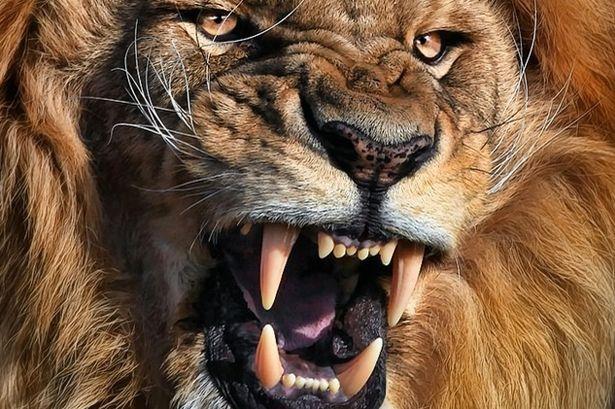 Name:  Lion-park.jpg Views: 881 Size:  76.4 KB