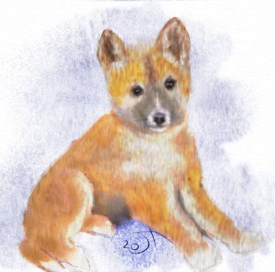Name:  Dingo pup.jpg Views: 158 Size:  26.1 KB