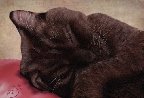 Name:  Sleeping brown catAR.jpg