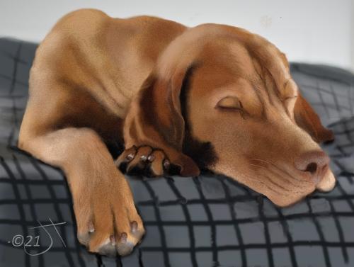Name:  Sleeping DogAR.jpg Views: 62 Size:  121.7 KB