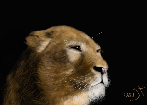 Name:  LionessAR.jpg Views: 120 Size:  74.7 KB