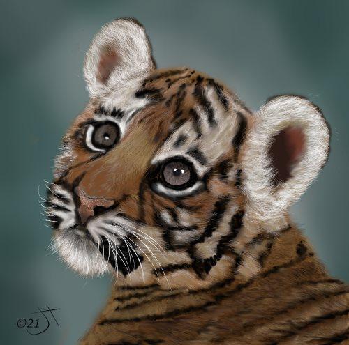 Name:  Tiger cubAR.jpg Views: 84 Size:  45.0 KB