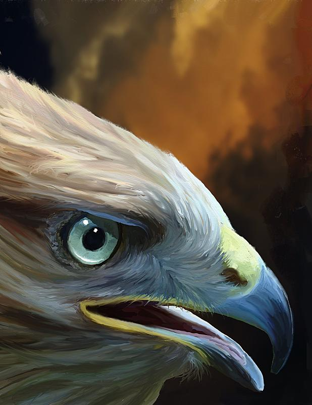Click image for larger version.  Name:Falcon Head (2k).jpg Views:78 Size:295.6 KB ID:91119