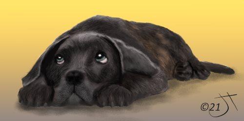 Name:  Sad DogAR.jpg Views: 121 Size:  16.4 KB
