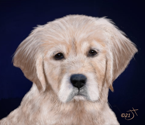 Name:  Golden Retriever PupAR.jpg