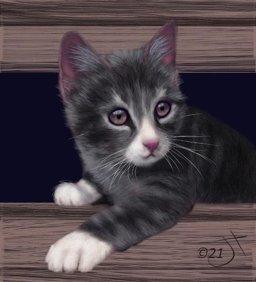 Name:  Curious KittenAR.jpg Views: 64 Size:  183.4 KB
