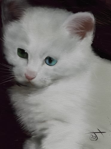 Name:  White kitten.jpg