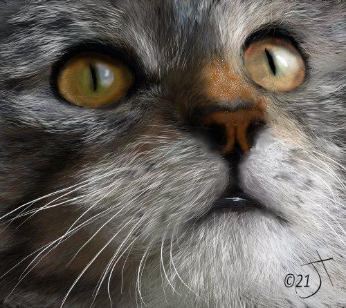 Name:  Catface#2AR.jpg Views: 72 Size:  67.8 KB