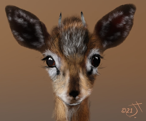 Name:  GazelleAR.jpg Views: 69 Size:  98.5 KB