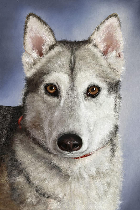 Click image for larger version.  Name:finished huskey smaller.jpg Views:32 Size:322.4 KB ID:100882