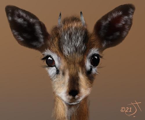 Name:  GazelleAR.jpg Views: 75 Size:  98.5 KB