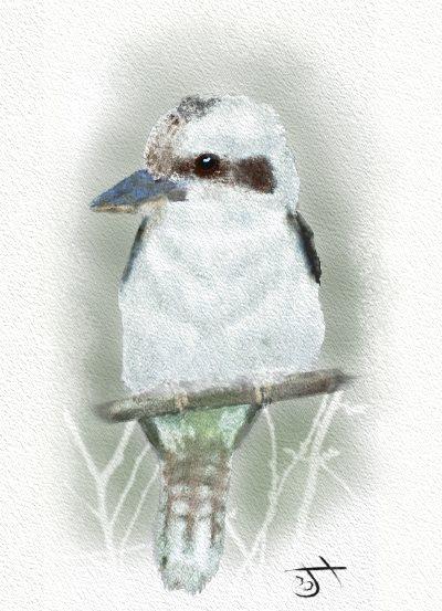 Name:  KookaburraSM.jpg Views: 74 Size:  56.3 KB
