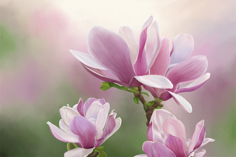 Click image for larger version.  Name:Magnolia-72.jpg Views:95 Size:33.3 KB ID:97367