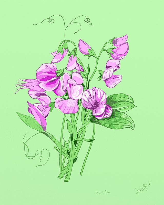 Click image for larger version.  Name:Sweet Pea 8  x 10.jpg Views:16 Size:214.9 KB ID:100989