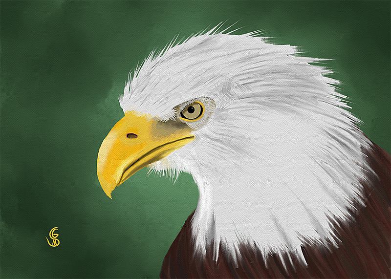Click image for larger version.  Name:eagle-2.jpg Views:66 Size:101.7 KB ID:86259