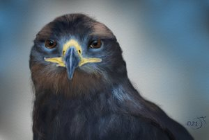 Name:  Revised eagle.jpg Views: 39 Size:  9.3 KB