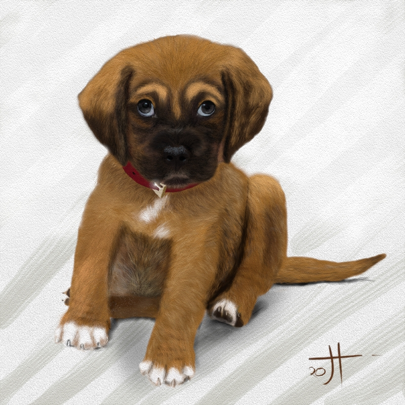 Click image for larger version.  Name:PUPPY.jpg Views:7 Size:111.1 KB ID:100860