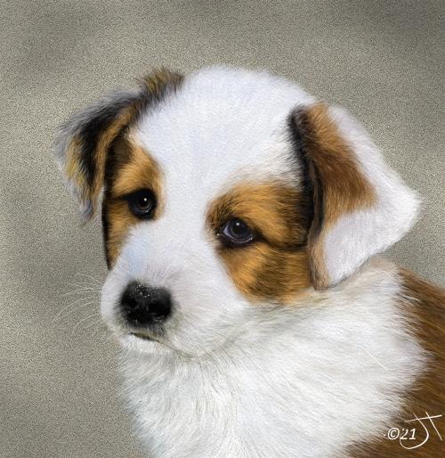 Name:  Corgi pupAR.jpg Views: 56 Size:  259.0 KB