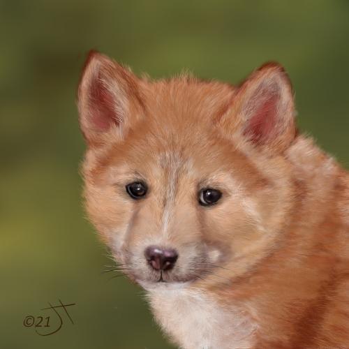 Name:  Dingo pupAR.jpg Views: 41 Size:  134.4 KB