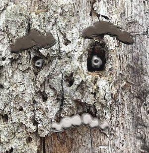 Name:  Tree face.jpg Views: 45 Size:  47.9 KB
