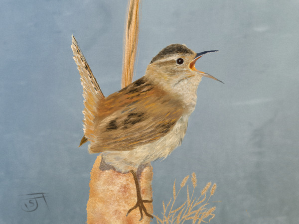 Name:  wren-revised-th.jpg