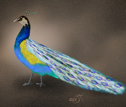 Name:  Peacock with tailAR.jpg