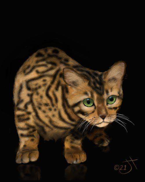 Name:  Bengal catAR.jpg Views: 140 Size:  35.6 KB