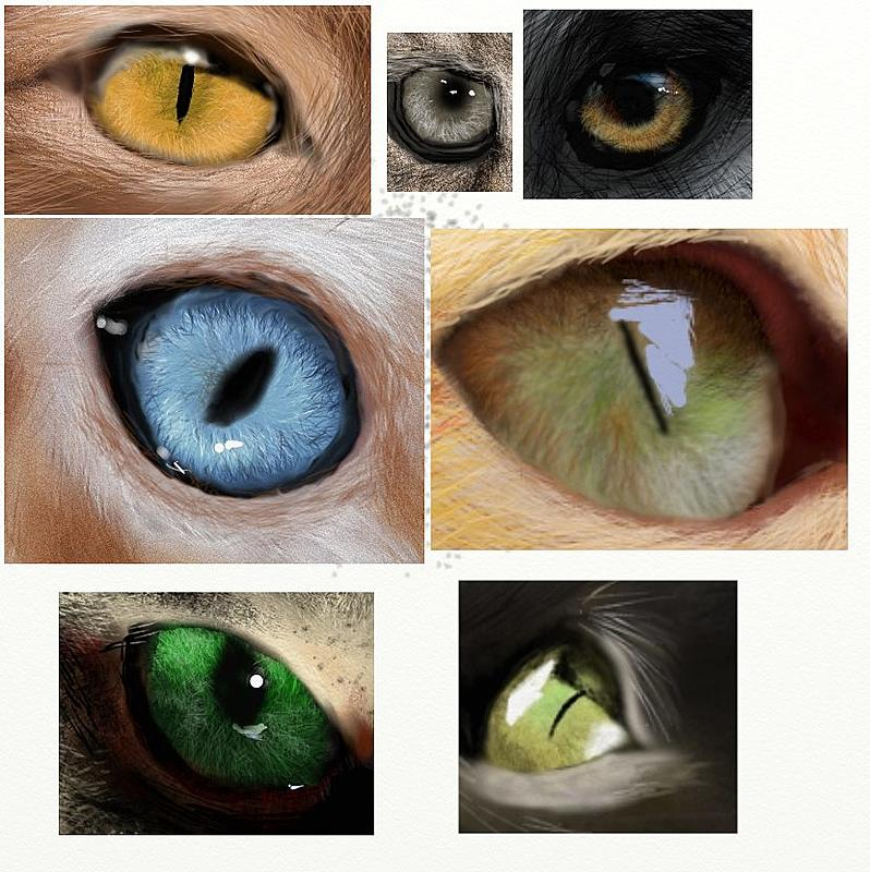Click image for larger version.  Name:Eyes.jpg Views:27 Size:133.4 KB ID:101048