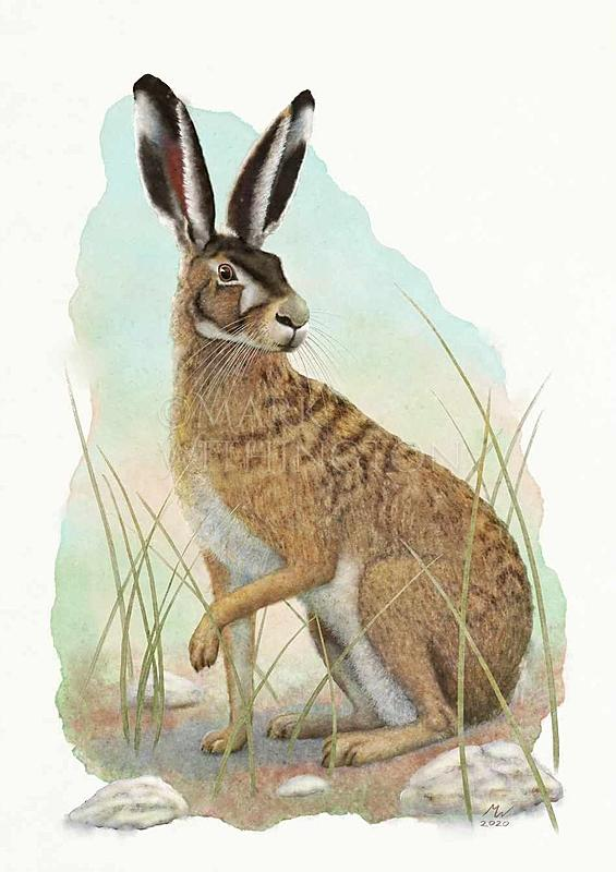 Click image for larger version.  Name:Hare.jpg Views:55 Size:129.7 KB ID:99790