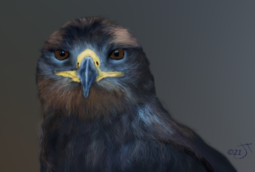 Name:  Eagle eyedAR.jpg Views: 54 Size:  70.5 KB