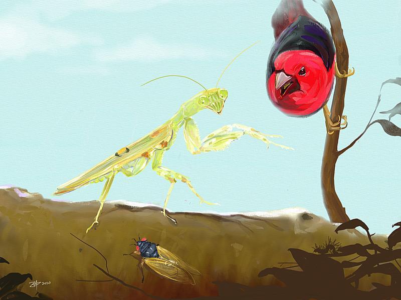 Click image for larger version.  Name:Mantis.jpg Views:113 Size:296.9 KB ID:98979