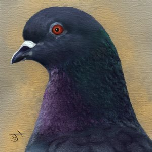 Name:  PigeonAR.jpg