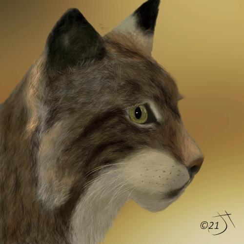 Name:  LynxAR.jpg Views: 47 Size:  143.1 KB