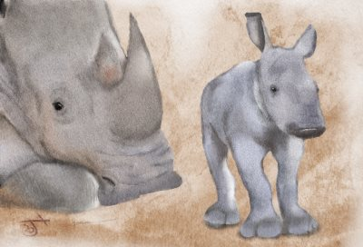 Name:  White Rhino moher and babyAR.jpg