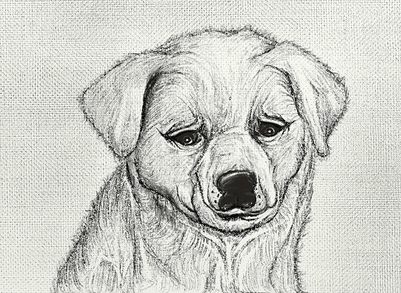 Click image for larger version.  Name:Doggy Pencil Shading.jpg Views:93 Size:231.0 KB ID:93502