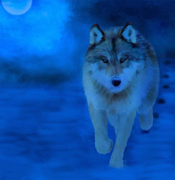 Name:  wolf1 copy.jpg Views: 87 Size:  311.9 KB