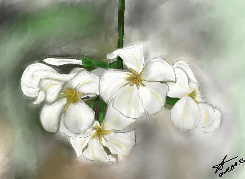 Click image for larger version.  Name:flowers3.jpg Views:8 Size:114.5 KB ID:97705