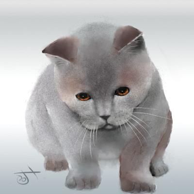 Name:  Pensive kitten.png Views: 111 Size:  240.1 KB