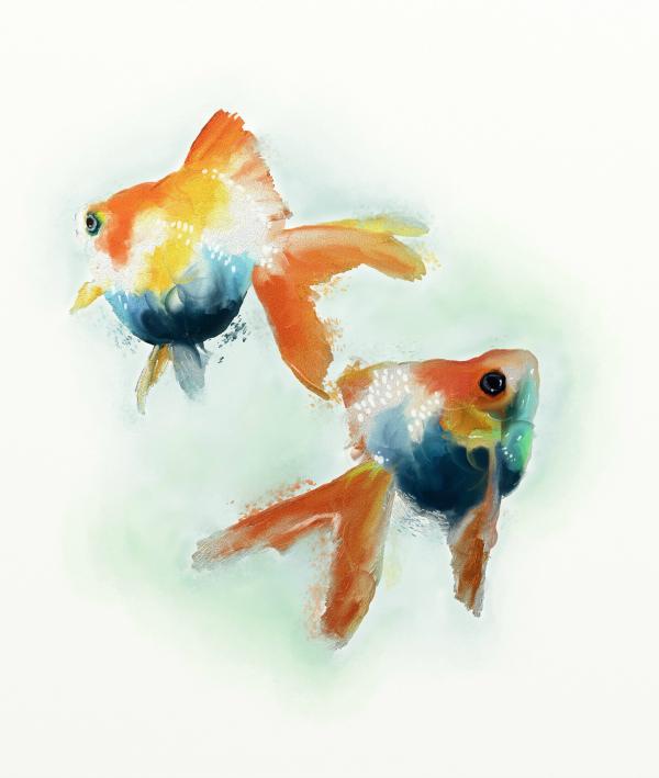 Name:  goldfish3flickr.jpg Views: 179 Size:  176.5 KB
