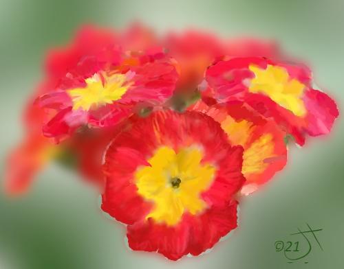 Name:  PolyanthusAR.jpg Views: 55 Size:  106.4 KB