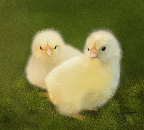 Name:  Ducklings.jpg Views: 50 Size:  35.0 KB