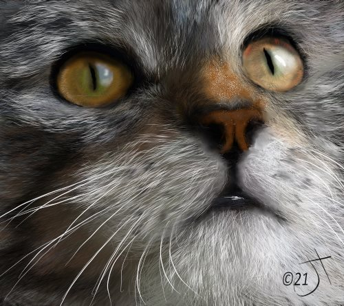 Name:  Catface#2AR.jpg Views: 73 Size:  67.8 KB