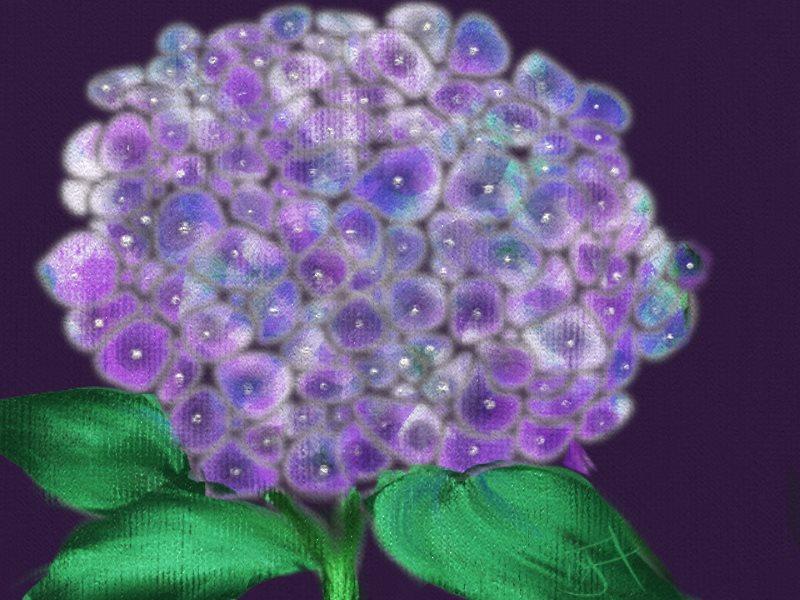 Name:  Hydrangea.jpg Views: 147 Size:  98.0 KB