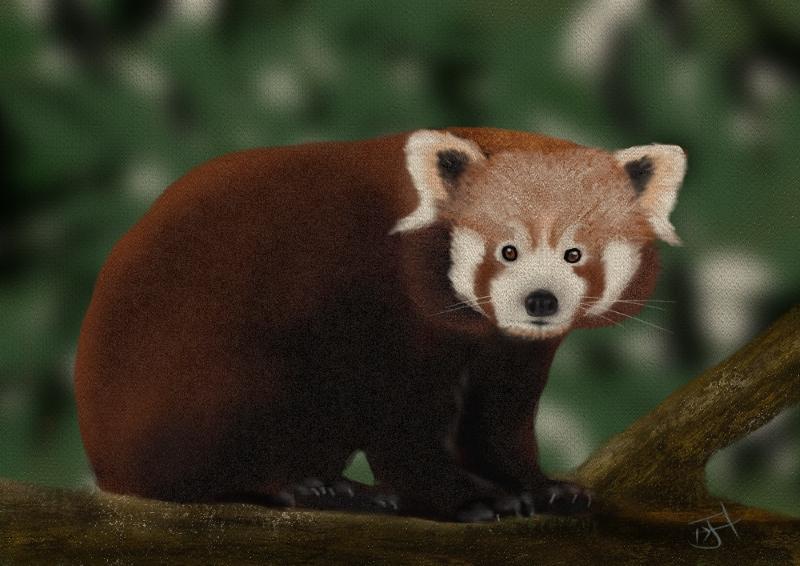 Name:  Red Panda.jpg Views: 116 Size:  347.8 KB