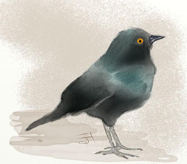 Name:  blackbird-th.jpg Views: 317 Size:  45.1 KB