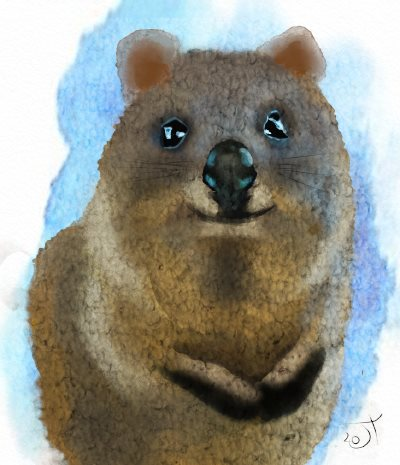 Name:  quokkaAR.jpg