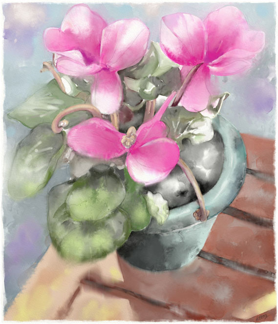 Name:  cyclamen.jpg